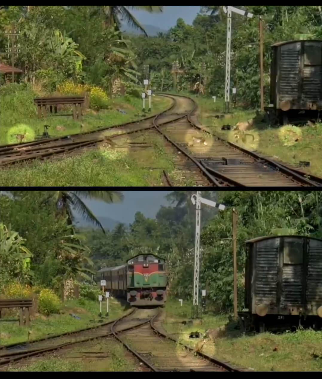 MonkeysTrespassing-KadugannawaRailwayStation-SriLanka.jpg