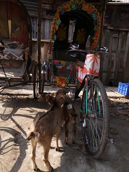 Ricksaw-Chandpur-R0125821.jpg